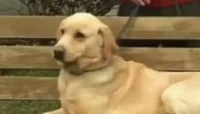 怎样让狗狗大小便规矩